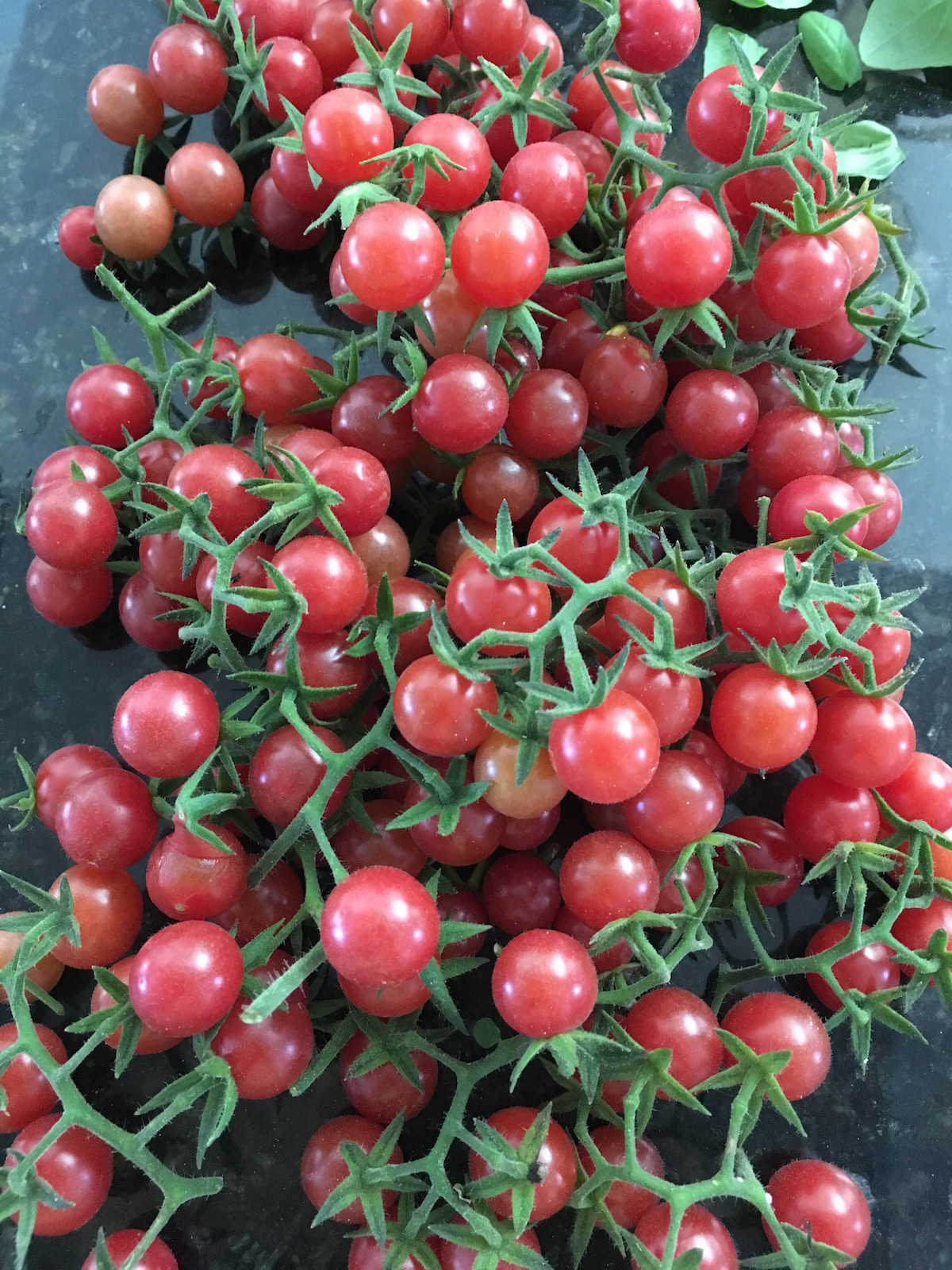 Everglades Tomatoes Fresh Picked