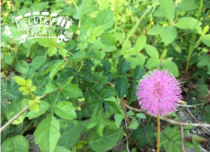 Field Trip FL Native Plant Nursery