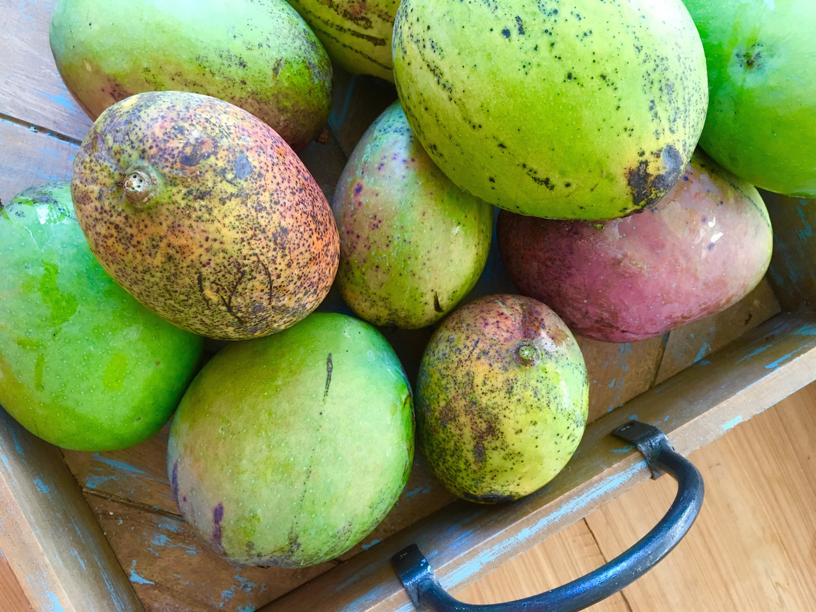 Fresh Florida Mangoes